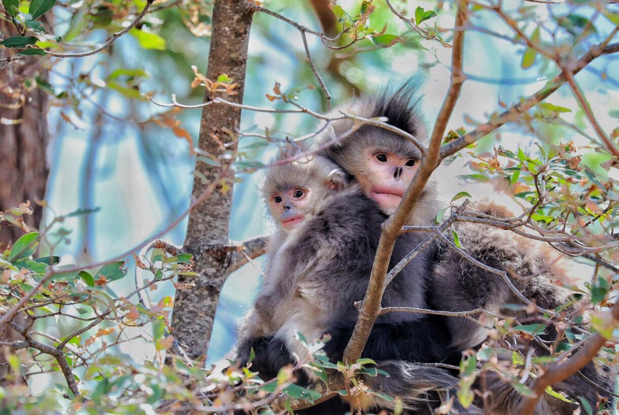 猴子玩耍的地方