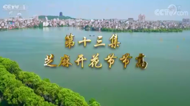 第十三集 芝麻开花节节高