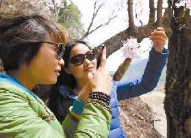 游客拍照杜鹃花