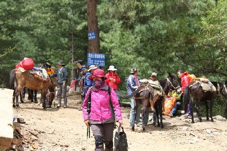 大批游客进入梅里雪山景区