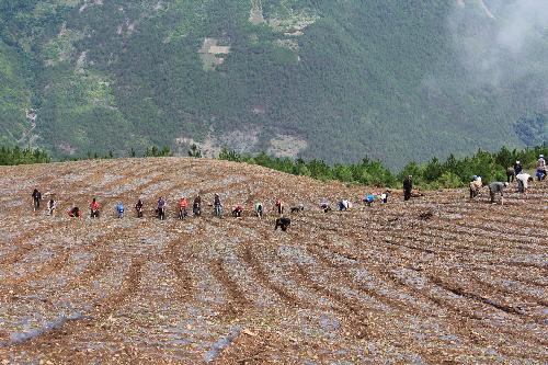 茨中村:盘活土地资源 带动村民致富