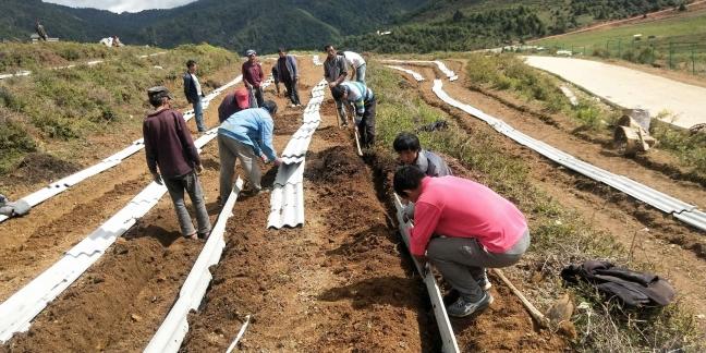 叁疆公司建药材基地促农民增收