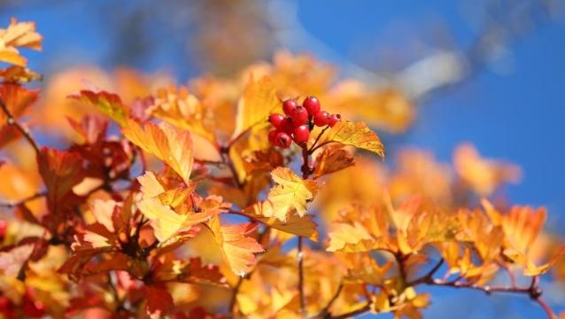 香格里拉的秋天如此之美
