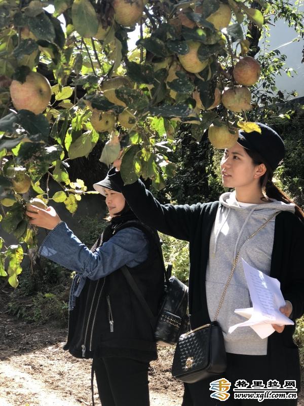 维西县中路乡积极引导农户种植经济林果