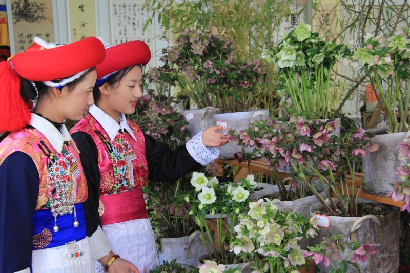 2019年香格里拉第五届春季花展暨书画奇石展开展