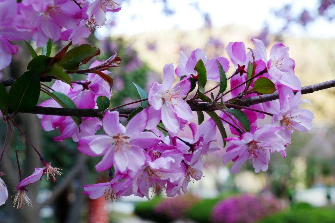 三月的迪庆经济开发区,春风送暖,万物复苏