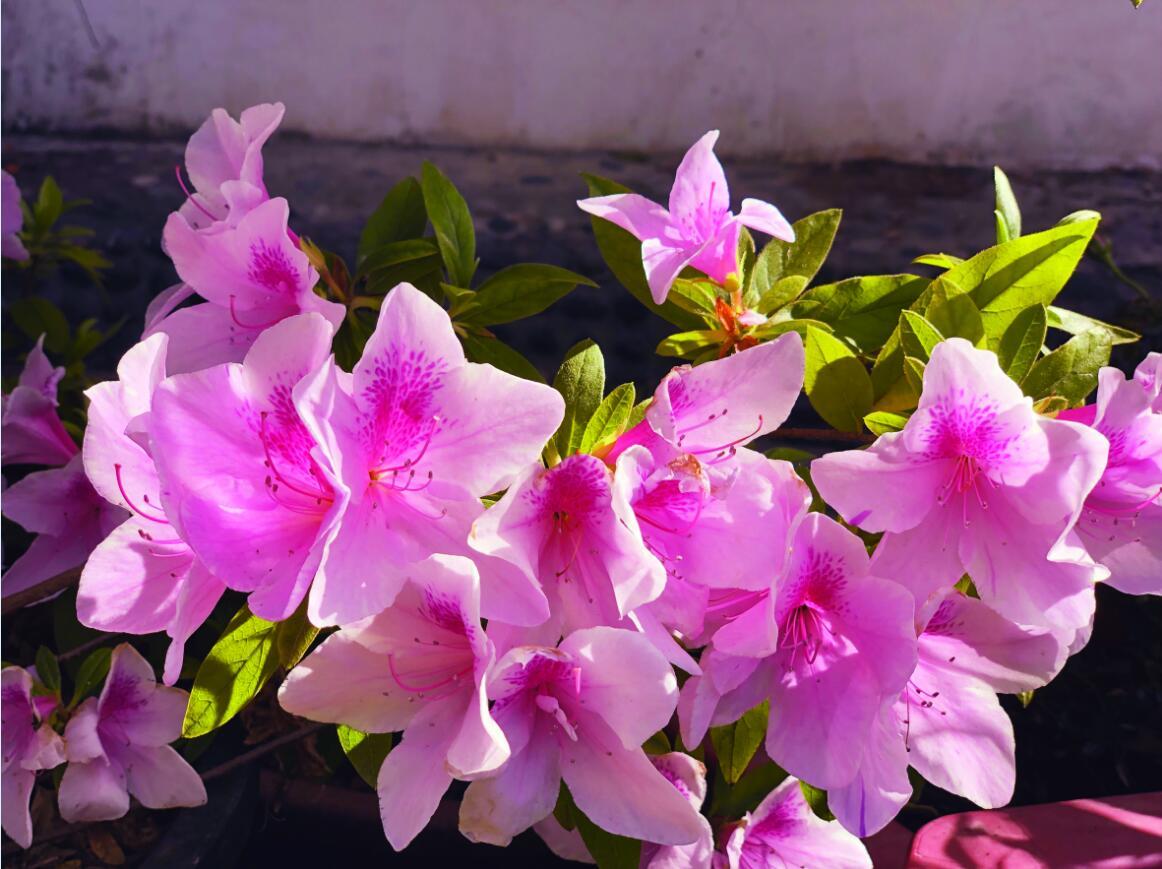 春天里的花事