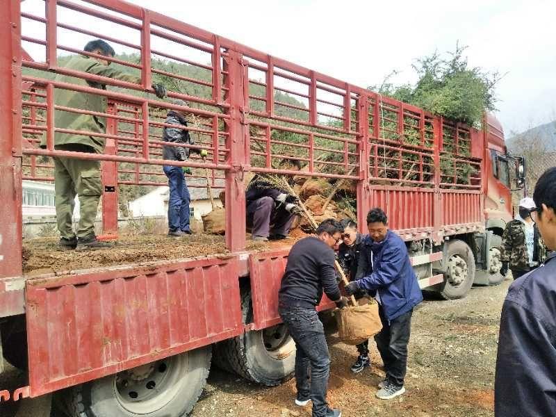 格咱乡开展百万林义务植树活动