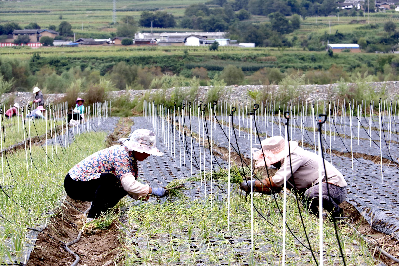 产业富民 振兴乡村
