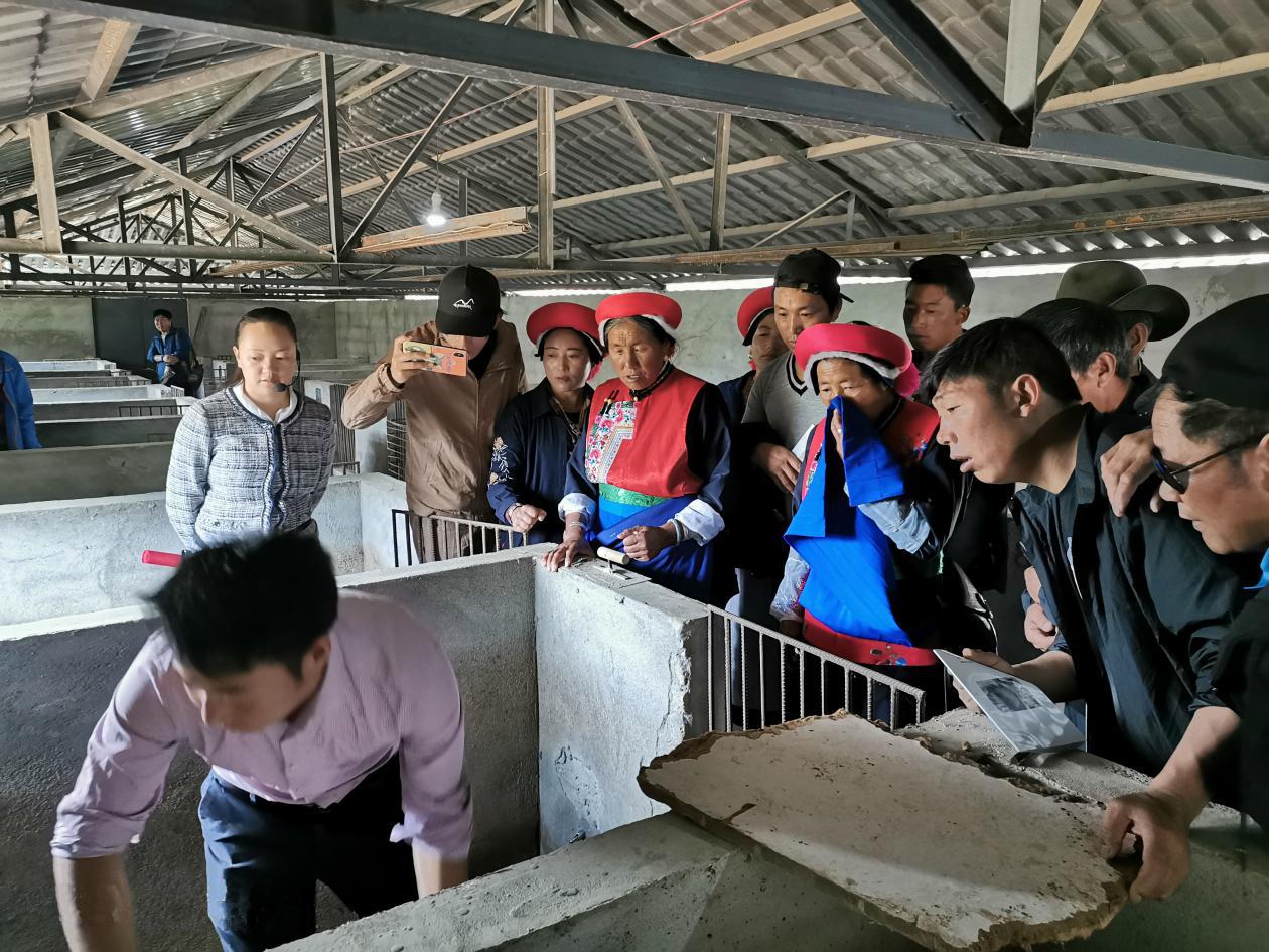 解放村村民赴金江镇学习豪猪养殖技术
