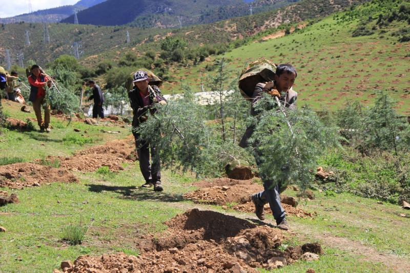 香格里拉市恢复城市面山植被