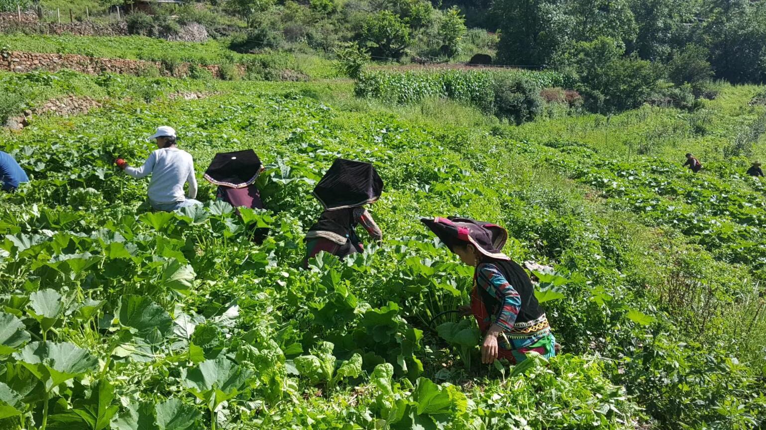 绿源生态种养专业合作社带动农户脱贫致富