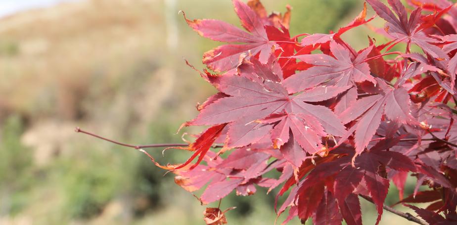 色彩斑斓的维西秋景