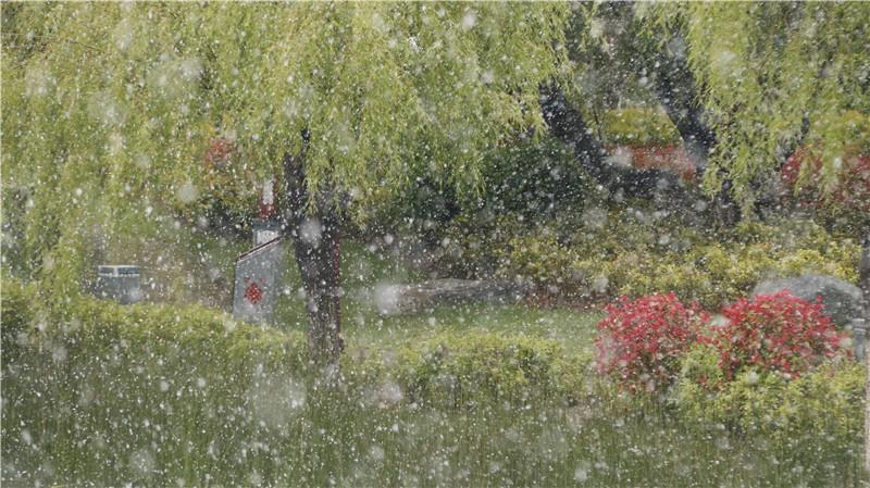 """香格里拉""""夏""""雪啦!"""