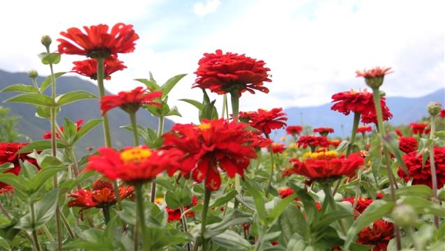【程志开的镜花缘】一起去汤满感受夏花的艳丽与芬芳