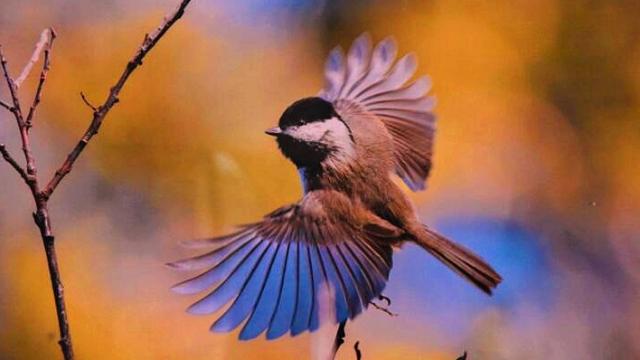 历届香格里拉冬季国际观鸟节成果展正式开展