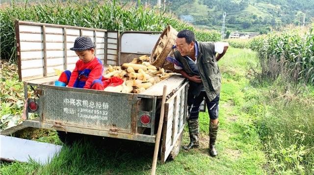 """金沙江畔开启""""农忙""""模式"""
