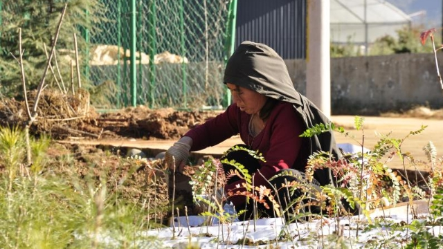 迪庆已储备11个品种苗木50余万株