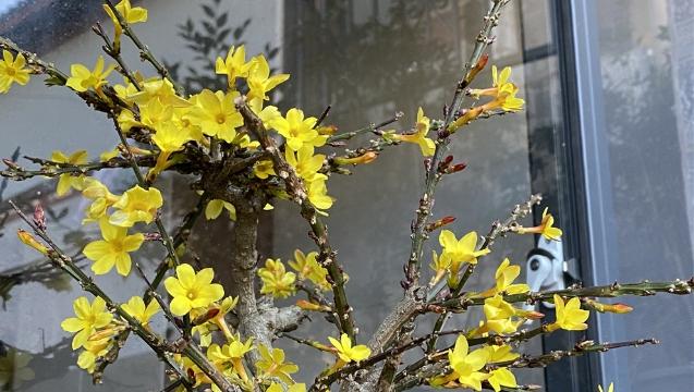 山城维西立春过后春意渐浓