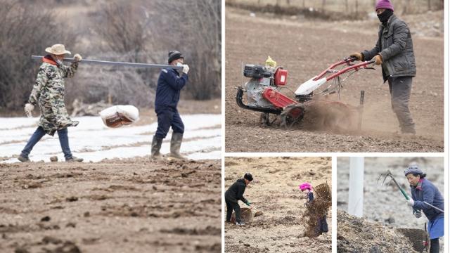 春来到,迪庆高原农耕忙