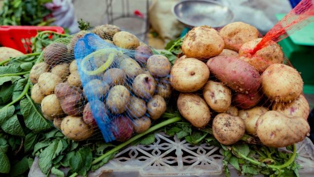 香格里拉本地绿色蔬菜陆续上市