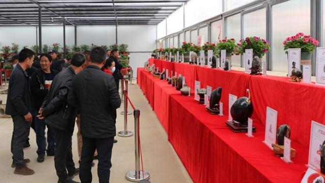 """第三届""""美丽家园""""花卉·奇石展在香格里拉市乐土花鸟市场开幕"""