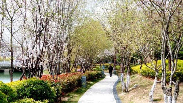 香格里拉市全力打造高原生态森林城市