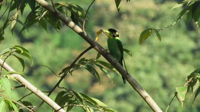 西藏调查发现5个新物种 25个新纪录物种