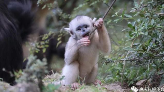 【COP15】这只小猴有多萌,你点进来看看就知道了